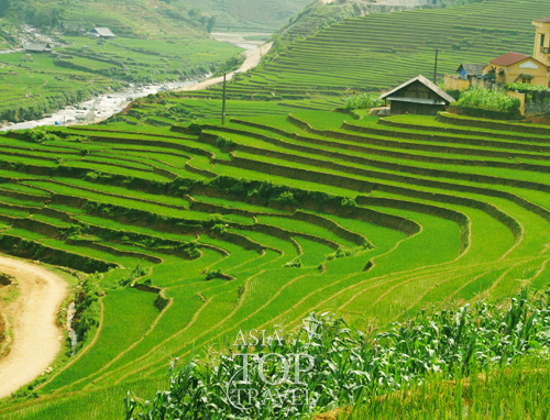 Rice terraces in Hoang Su Phi