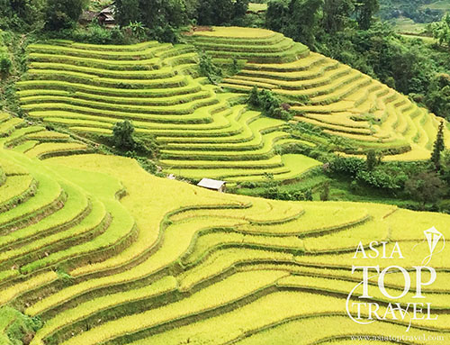 Hoang Su Phi terrace paddy fields